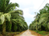Indonesian #palm plantation thumbnail